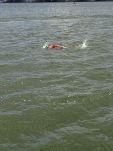 2014 stijgereiland swim